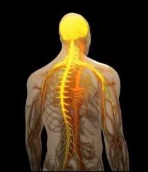 Nöral Terapi - Uzm. Dr. Yasemin SOYTÜRK ÖZSEREN